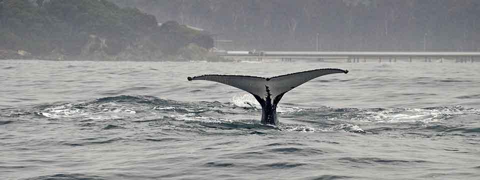 Whale season charters