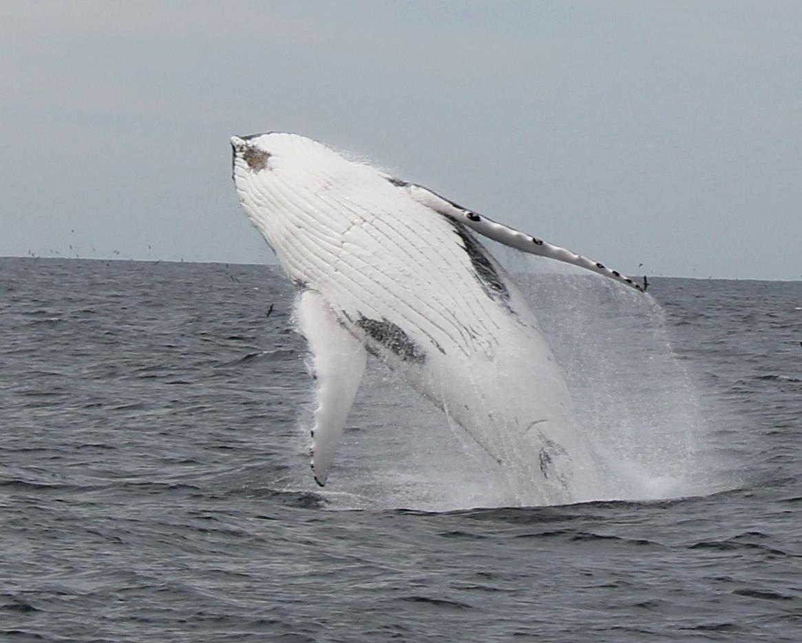 The 2019 Eden Whale Festival Planning Has Begun!